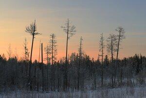 Сибирское утро
