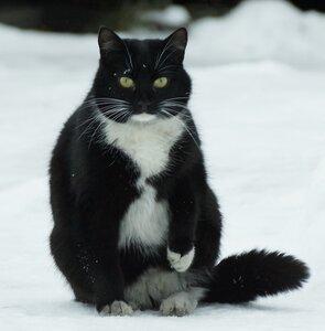 Кошка Юля.