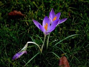 Послание весны